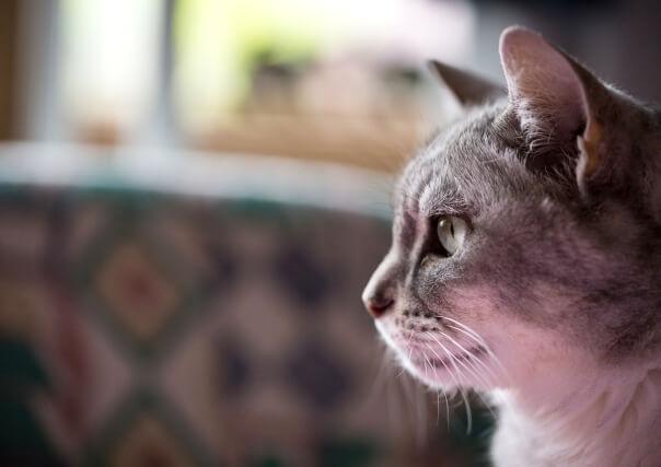 キャットPaPaが伝えたい「愛猫との向き合い方」~旅立つその日までにできること~