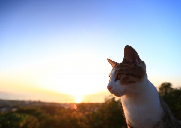 猫の火葬を執り行う「キャットPaPa」のセレモニーグッズはオリジナル