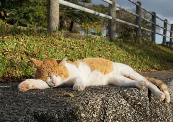 猫が人と関わった歴史は古い~猫の歴史~