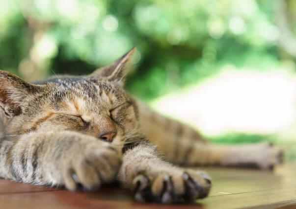 猫の葬儀・猫の火葬を専門とする「キャットPaPa」から皆様へ
