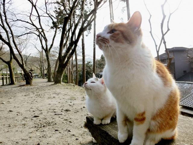 ペット葬儀・ペット火葬の種類②