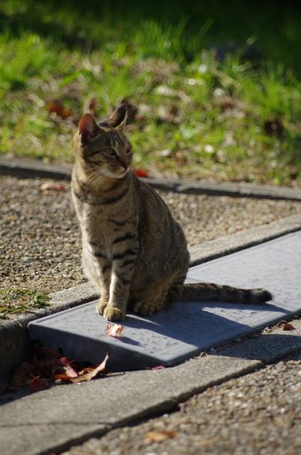 猫の火葬・葬儀の後、お骨をどうしますか?